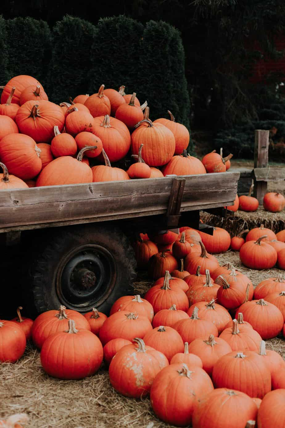 Save money on Thanksgiving dinner by shopping seasonally. Seasonal pumpkins stacked up on a pick up truck.
