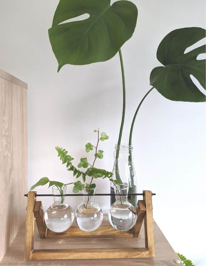 Propagate House Plants with a propgating station
